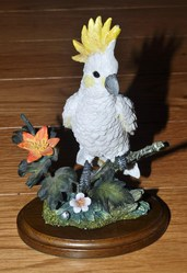 Country Artists Cockatoo